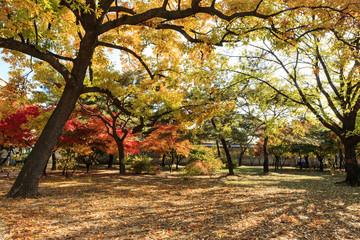 yellow tree, korean royal palace, landscape, Gyeongbokgung palace in seoul, korea.