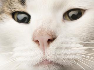 Katzennase, Katzen Nase ganz nah, hohe Bildauflösung, Makro