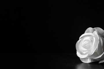 White rose flower on the dark background. Condolence card. Artificial flower. Empty place for a text.