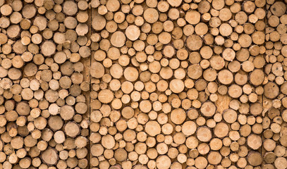wooden background from a log close up