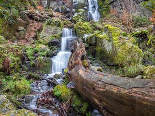 Baumstamm vor einem Wasserfall