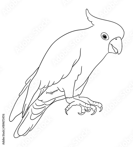 Cockatoo bird line art 05  Good use for symbol, logo, web
