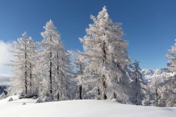 Wall Mural - Frozen forest