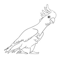 Cockatoo bird line art 02. Good use for symbol, logo, web icon, mascot, sign, coloring, or any design you want.