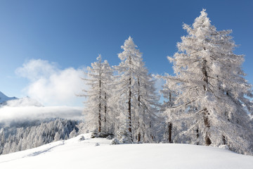 Fototapete - White winter in mountains