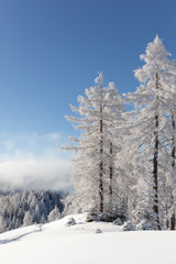 Fototapete - Frozen forest. Winter landscape