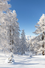 Fototapete - Winter fairy tail in Austrian Alps