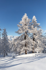 Fototapete - White winter forest in Austrian Alps