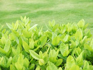 Closeup bush in park