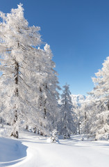 Fototapete - Winter landscape with snowy forest