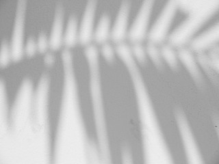 shadow of the leaves on a white wall Wall mural