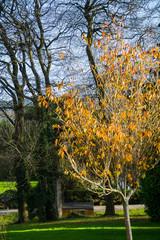 Autumn leaves on tree.