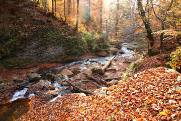 Waterfall in the autumn beech forest