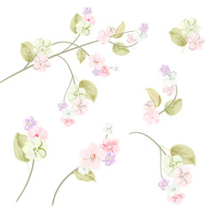 Spring blossom (bloom), branches with mauve, pink apple tree flowers. Set of light floret, buds, green leaves on white background. Digital draw, close-up in watercolor style, vintage, vector