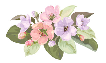Spring blossom, horizontal border with mauve, pink apple tree flowers. Bouquet light floret, buds, green leaves on white background. Digital draw illustration in watercolor style, vintage, vector