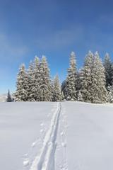 Fototapete - Spur im Schnee in Gebirgslandschaft