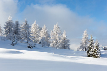 Fototapete - Winter landscape with a lot of snow