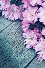 Rustic style Spring background with pink Japanese cherry blossom close up