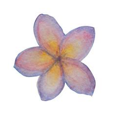 watercolor plumeria clipart