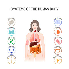 systems of the human body. set icons