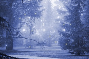 Fir trees with fog and stars in blue tones.