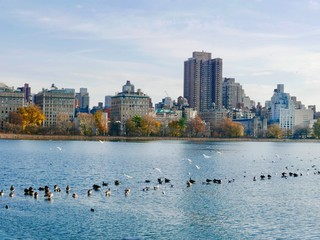 Birds on the Reservoir