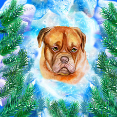 Bordeaux Mastiff symbol of New Year and Christmas greeting card design with fir tree branches. Cute dog watercolor illustration isolated on snowy background, postcard in winter holidays concept