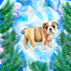 English Bulldog puppy symbol of New Year and Christmas greeting card design with fir tree branches watercolor on snow. British Bulldogs muscular, hefty dog with wrinkled face and a distinctive nose
