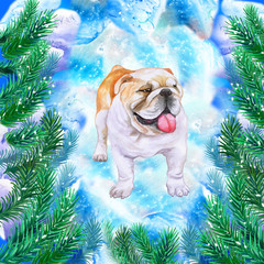 English bulldog symbol of New Year and Christmas greeting card design with fir tree branches. Cute dog watercolor illustration isolated on snowy background, postcard in winter holidays concept