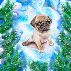 Chinese wrinkled pug puppy symbol of New Year and Christmas greeting card design with fir tree branches. Cute small dog watercolor illustration isolated on snowy background, funny postcard