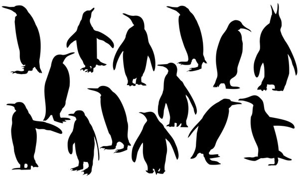 a collection of silhouette penguins