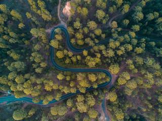 Carretera y bosque