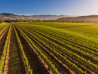 aerial of a vineyard in the Santa Ynez Valley, California