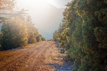 Forest trail. Way to peak. Cedar tree. Coniferous forest