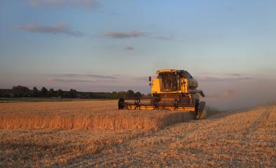 Wheat harvest in Ukraine