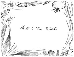 Bulb and Stem Vegetables Frame on White Background