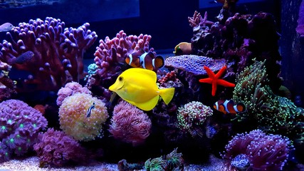 Amazing saltwater coral reef fish tank