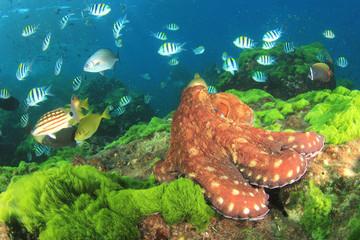 Octopus in ocean