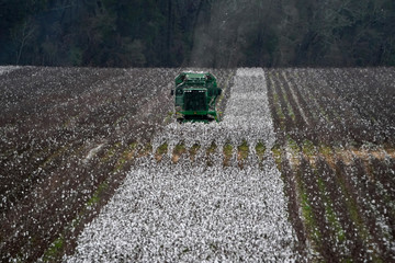 A piece of farm equipment harvests cotton in a field just outside Montgomery, Alabama