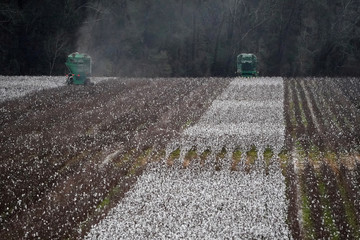 Farm equipment harvests cotton in a field just outside Montgomery, Alabama