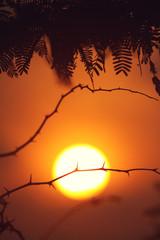 Beautiful Sunrise with Thron Plant