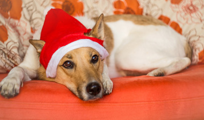 cute dog with a christmas hat