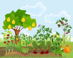 Garden with different vegetables and fruit trees. Garden in the summer