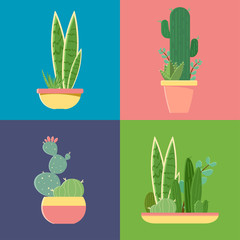 Vector set cactuses in pots on different backgrounds. Flat illustration for product design