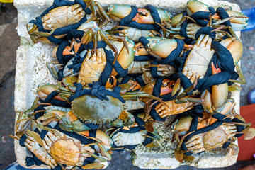 Giant mud crabs or Scylla Serrata are tied raw sea food at Asian street Seafood market in Vietnam