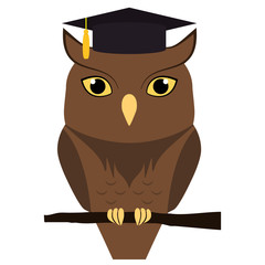Cute owl with graduation hat on head, isolated on white. Vector flat illustration.