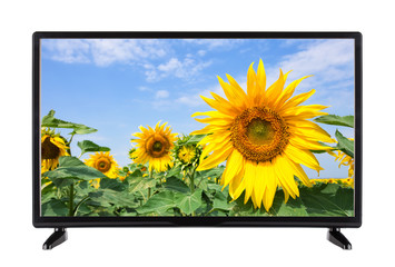 Flat modern TV with sunflower on the screen