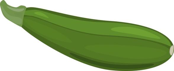 Fresh green zucchini on white background