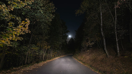 Empty road crossing pine tree woodland illuminated by moon. Loneliness and fear concept.