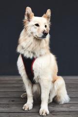А mongrel dog posing at the camera